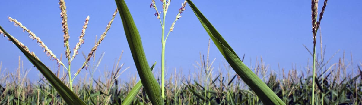 Working Together on ERA for GM Crops
