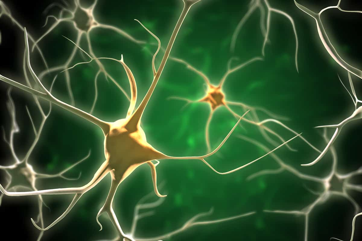 neurons_dreamstime_xl_11819923