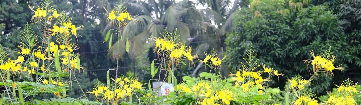 7th International Botanical Conference
