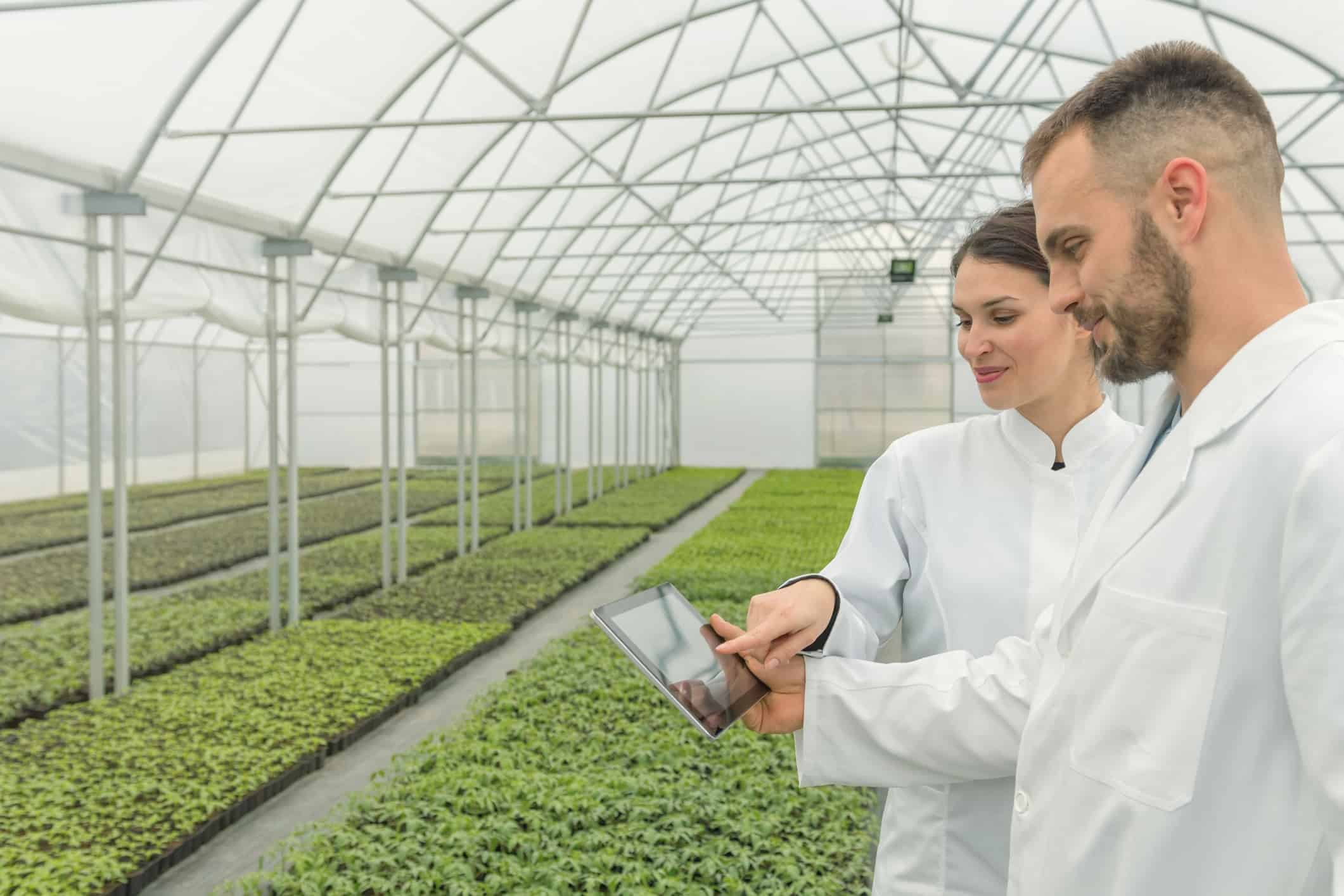 Agricultural Engineers using tablet greenhouse. Seedlings Greenhouse.